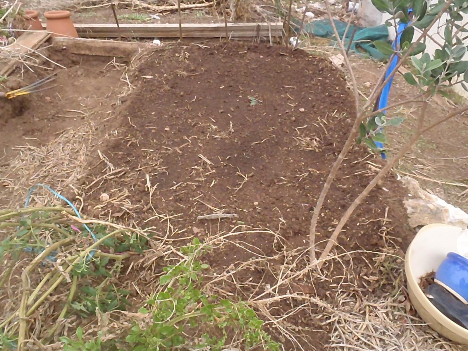 kapunda garden: Back in the garden