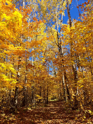 Roy's Run ski trail, October 3rd, 2016