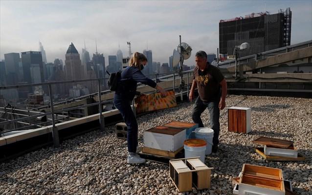 Μελίσσια στους ουρανοξύστες της Νέας Υόρκης