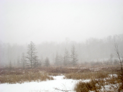 Heavy snow falling as seen near a slough on Mother North Start trail.