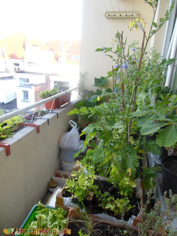 My balcony urban vegetable garden June 2015 in Brussels