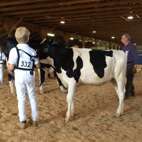 youth dairy show