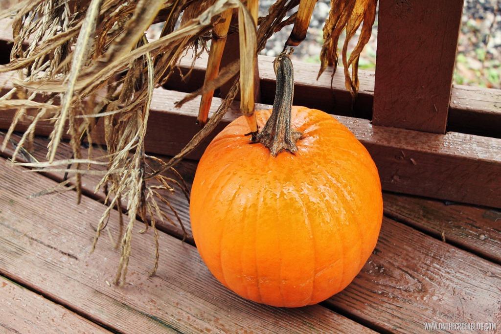 [pumpkin4%5B10%5D]