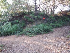 左に港の下山路を分けて(右に進む)