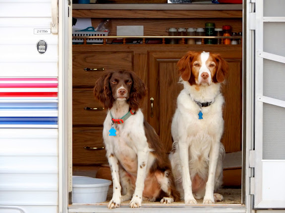 Boulder and Torrey in the camp trailer