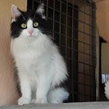 2013-2 gatti