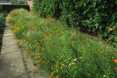 Garden Wild Border