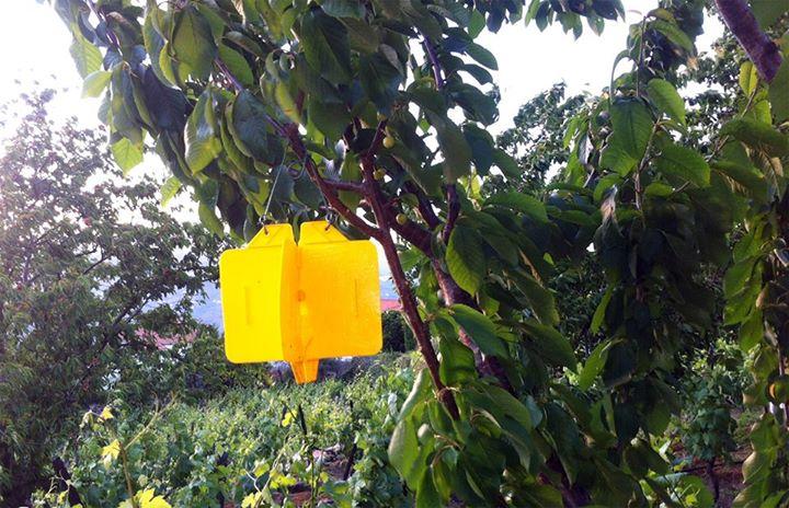 Junta de Freguesia de Penajóia continua a apostar na prevenção das pragas da fruta