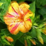 Gardening 2014 - 116_1970.JPG