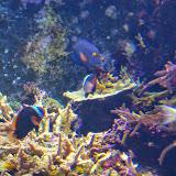 Downtown Aquarium - 116_3995.JPG