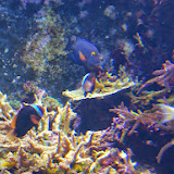 Downtown Aquarium - 116_3995.JPG