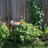 Gardening 2011 - 100_7818.JPG