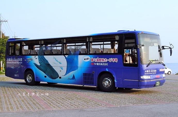48 沖繩自由行 觀光巴士一日遊 推薦 美麗海家族服務號觀光巴士 Rado觀光巴士 美麗海水族館 琉宮城蝴蝶園 名護鳳梨園