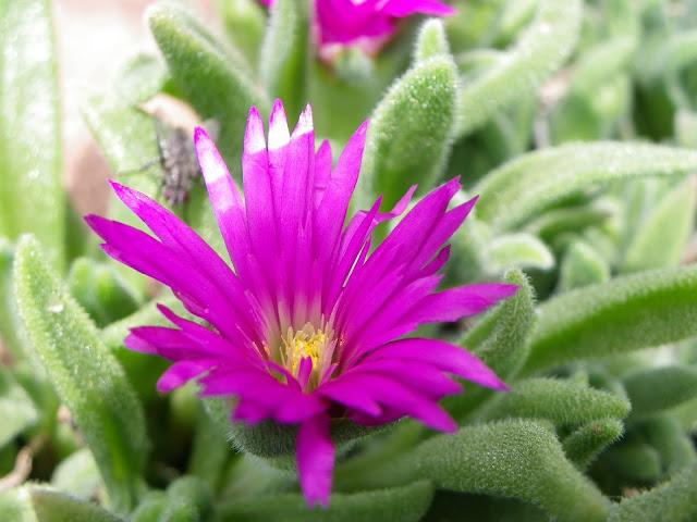Quelques fleurs IMGP5849