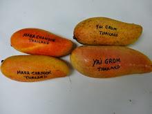 Maha Chanook & Yai Grom