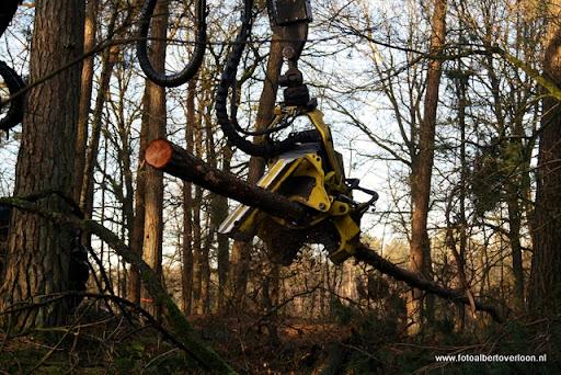 Houtoogst in de bossen van overloon 17-01-2012 (5).JPG