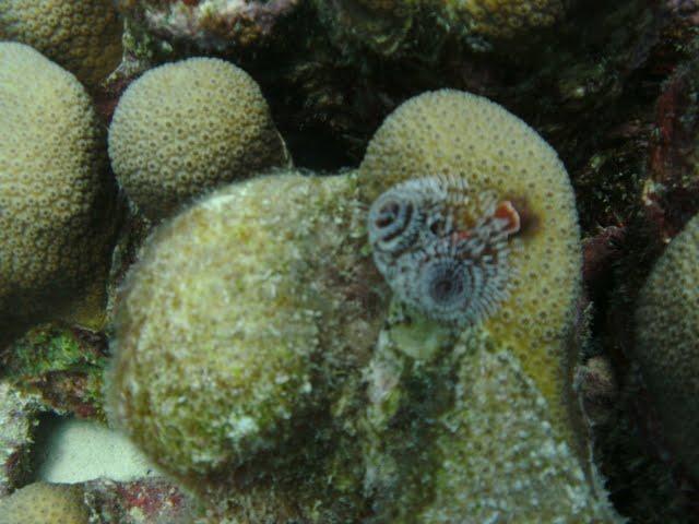 Bonaire 2011 - PICT0164.JPG