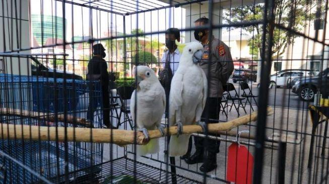 Menyamar Jadi Pembeli, Polisi Amankan Dua Pelaku Penjual Satwa Langka di Jogja