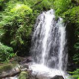 Mount Totumas, 1850 m (Chiriquí, Panamá), 25 octobre 2014. Photo : J.-M. Gayman