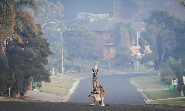 Smoke hangs over Tathra, on the south coast of NSW, which was evacuated in response to encroaching flames in March 2018. Photo: Fairfax Media
