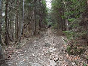 Photo: 11.Na szlaku w okolicach Małego Szczebla.