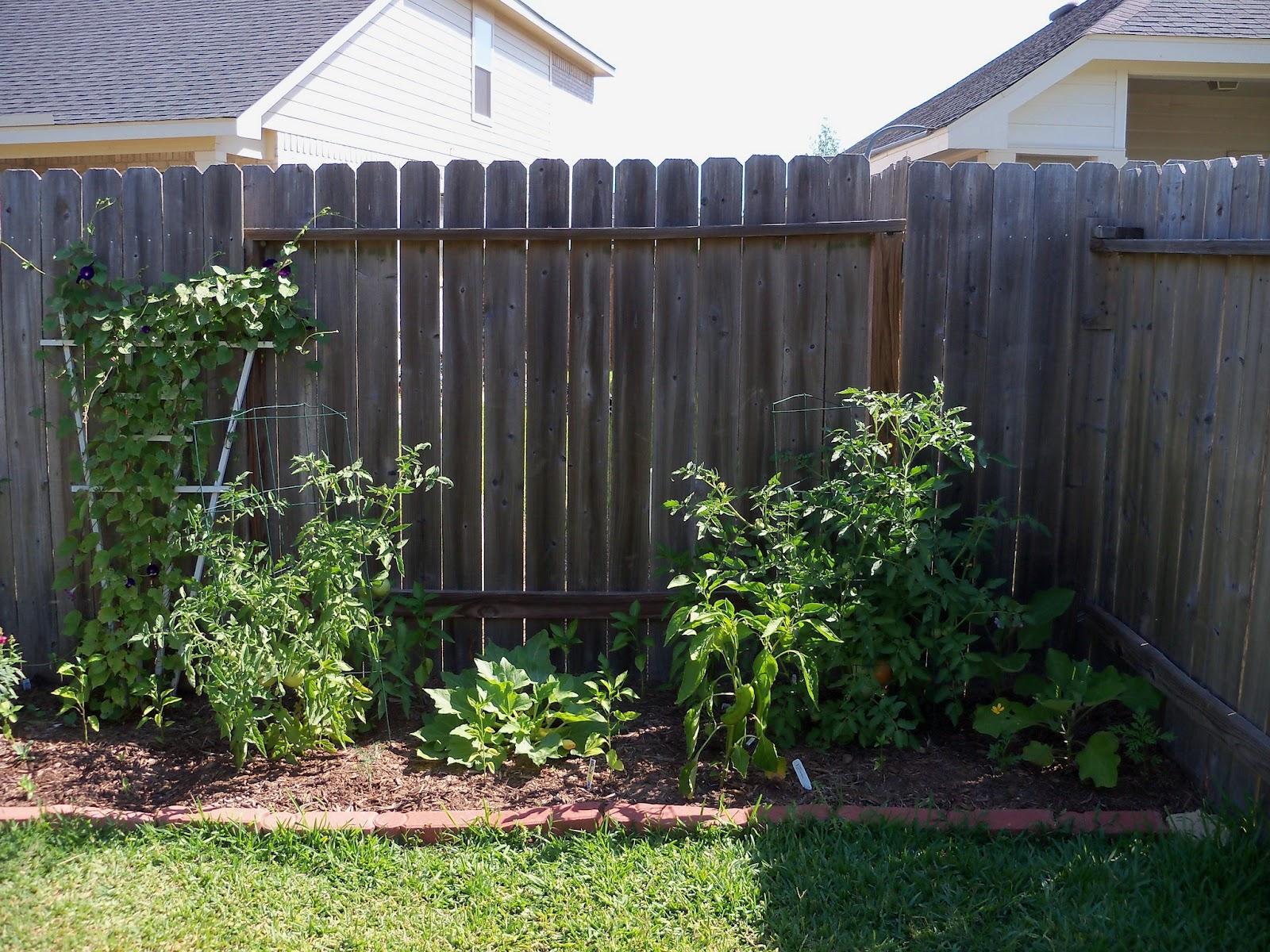 Gardening 2011 - 100_9020.JPG