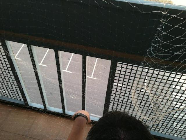 redes - Resumen de ideas para mosquiteras y redes ventanas y balcón para gatos. IMG_2657