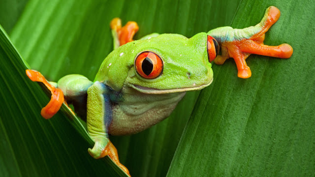 50 Unique Amphibian Animals List 1