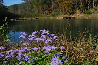 Photo: Wildflowers blooming at Lake Tawasi