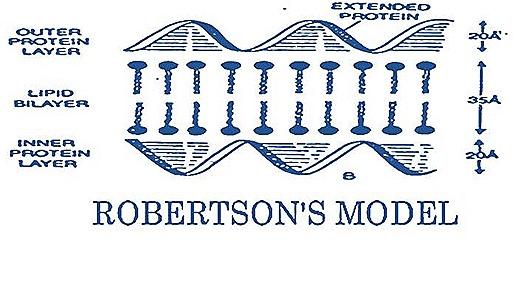 robertson-plasma-mambrane-cell mambrane (4)