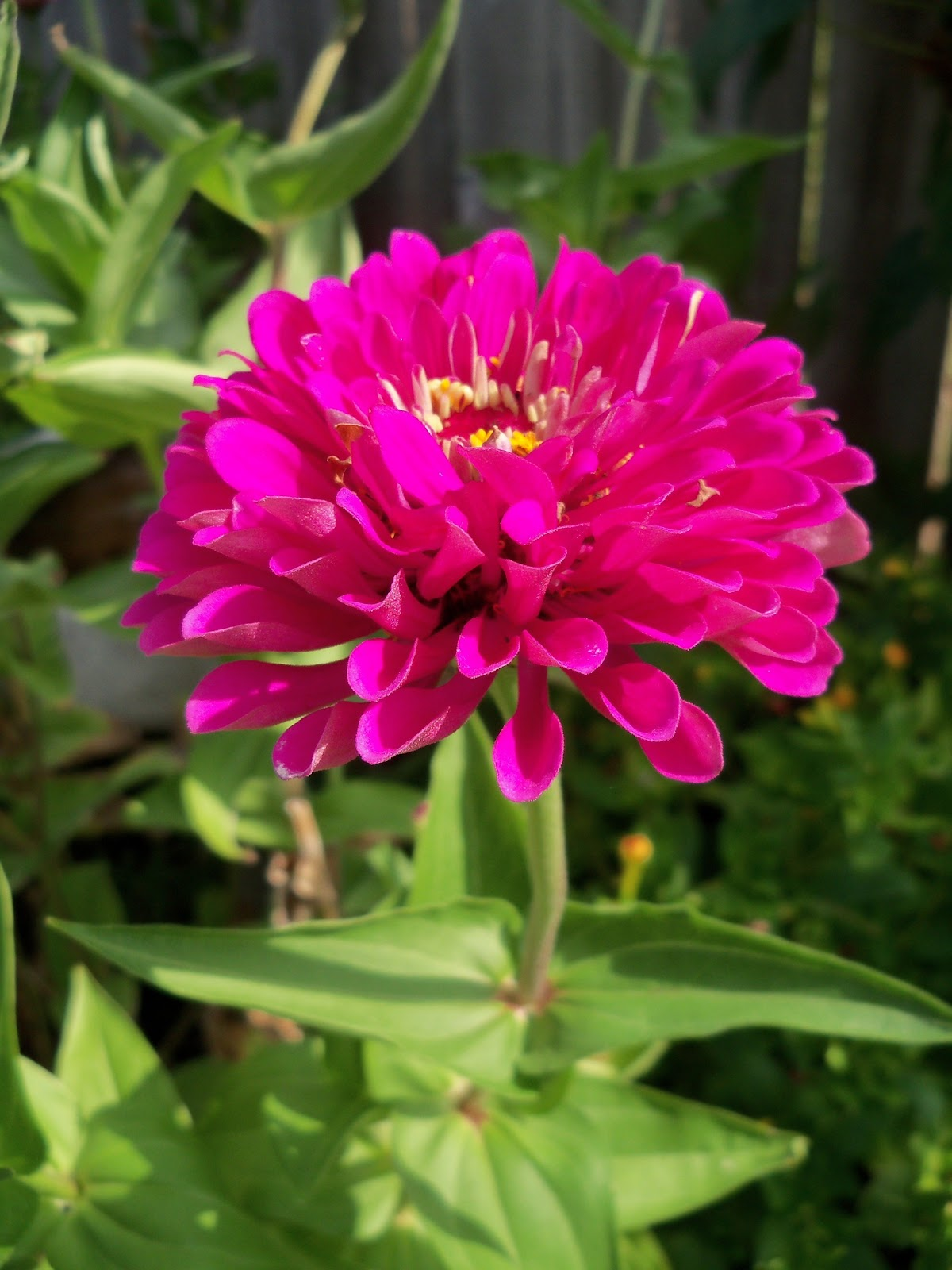 Gardening 2011 - 100_0091.JPG