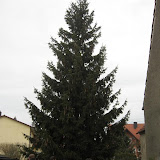 Christbaum 07