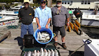 Sept 20 2013  Limit of Rock, 50 Bluefish and 3 fat Mackerel