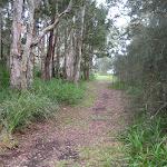 Track through the campsite