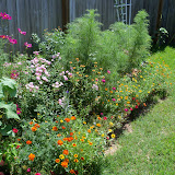 Gardening 2010, Part Three - 101_4385.JPG