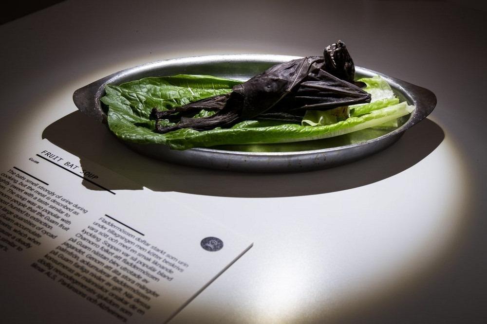 disgusting-food-museum-6