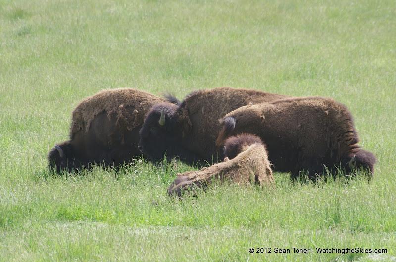 05-11-12 Wildlife Prairie State Park IL - IMGP1588.JPG