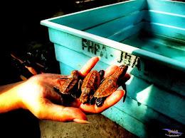 explore-pulau-pramuka-ps-15-16-06-2013-080