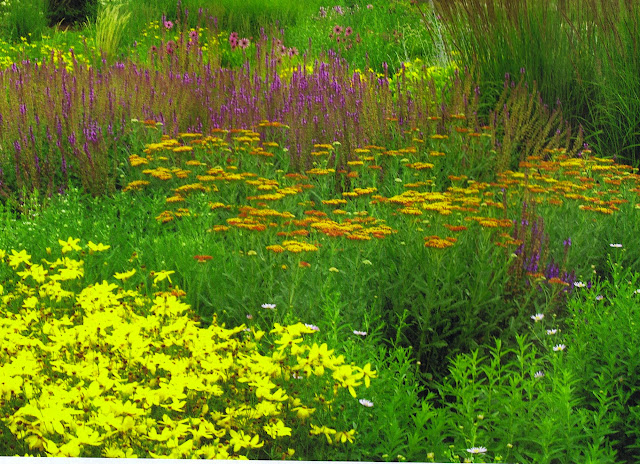 Colorful Perennials and Grasses