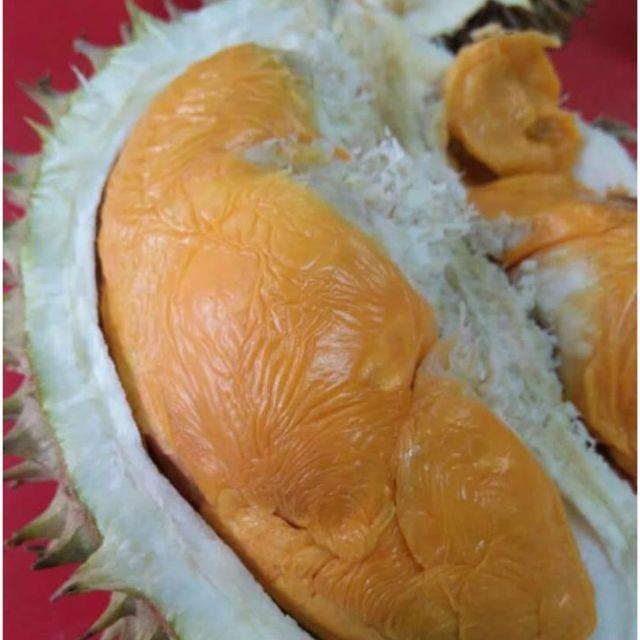 Durian Udang merah malaysia