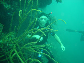 Caribbean Sea Diving, Utila, Honduras