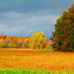 Sunlight_in_Autumn._Symanntha_Renn_2013._Missouri.JPG