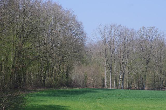 Les Hautes-Lisières (Rouvres, 28), 30 mars 2012. Photo : J.-M. Gayman