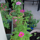 Gardening 2011 - 100_8925.JPG