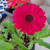 Gardening 2010 - 101_0482.JPG