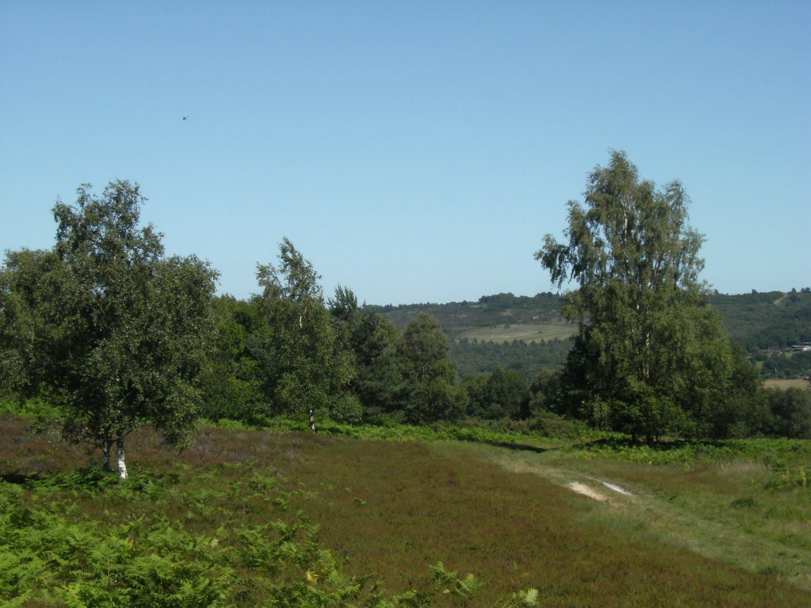 DSCF8740 Ashdown Forest