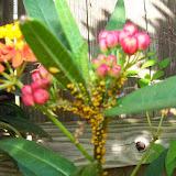 Gardening 2015 - 116_7664.JPG