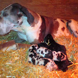 Savanna & her babies @ 1 week