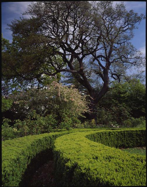 Wingfield, Jo Lynch's garden, Davey Street, Hobart