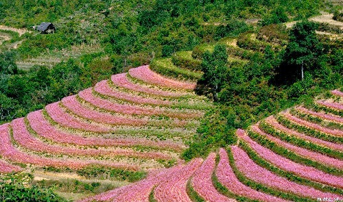 kham pha ban do hoa tam giac mach1 Khám phá bản đồ hoa tam giác mạch